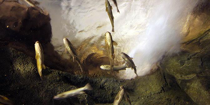 vis georgia aquarium