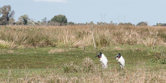vogel wetlands