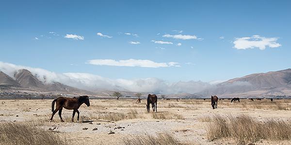 paardrijden tafi del valle argentinie