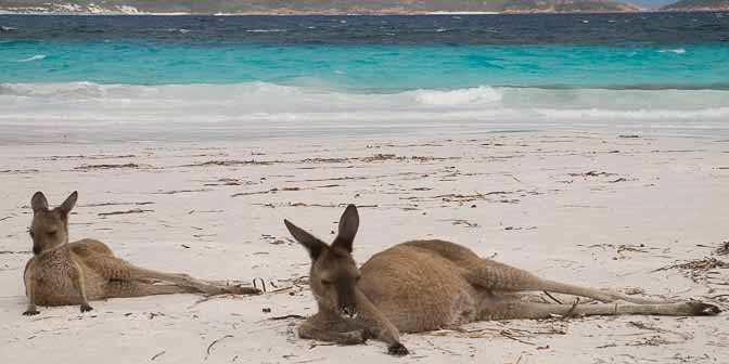 kangaroe strand