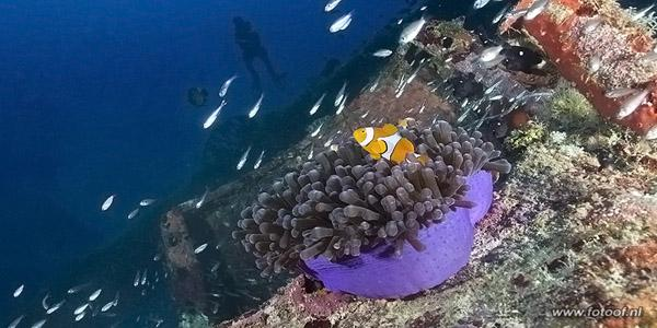 onderwaterfotografie systeemcamera