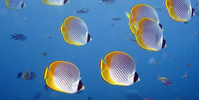 tulemben onderwaterfotografie