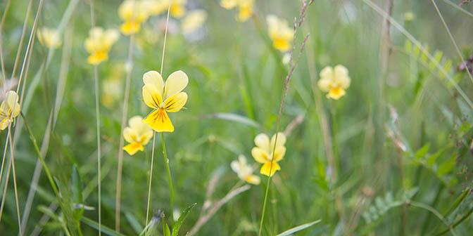 flora plombieres