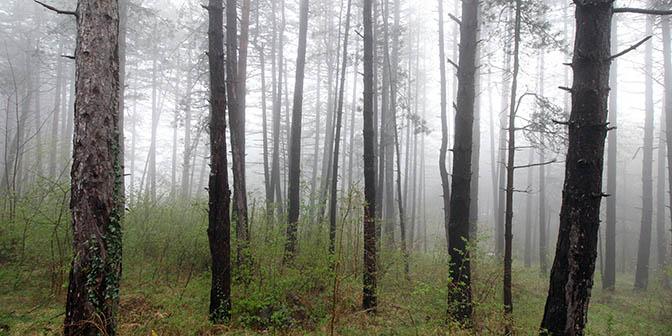 natuur bosnie