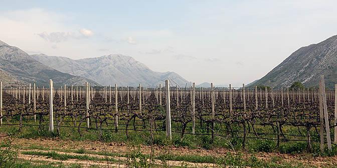 wijn trebinje bosnie
