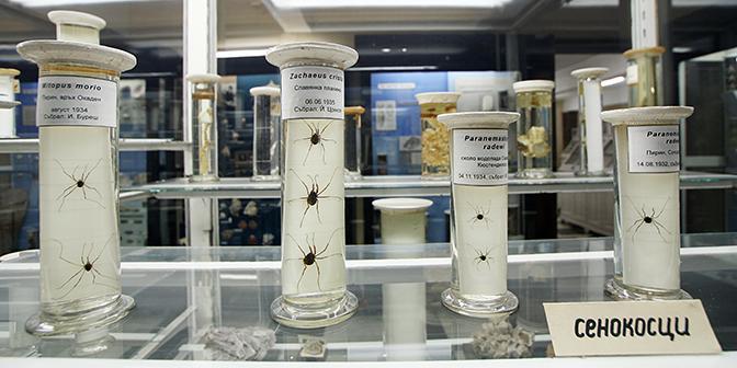 natuur historisch museum sofia