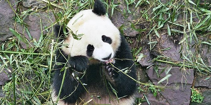 eten panda