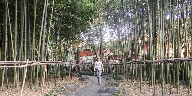 bamboe china