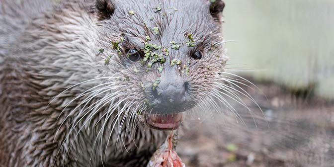 otter wildpark