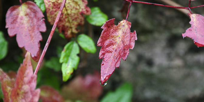 herfst in heidelberg