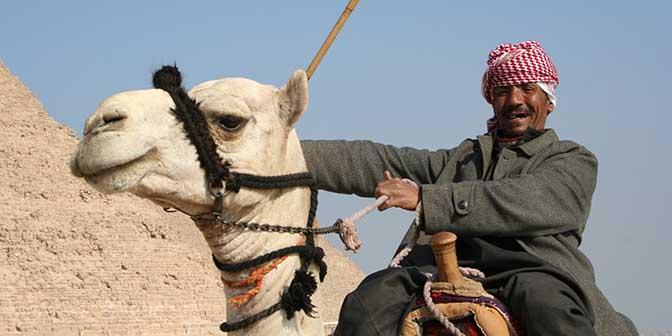 kameel egypte cairo