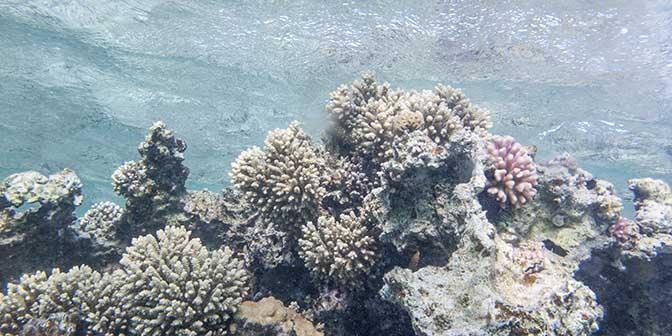 rotsformatie rode zee