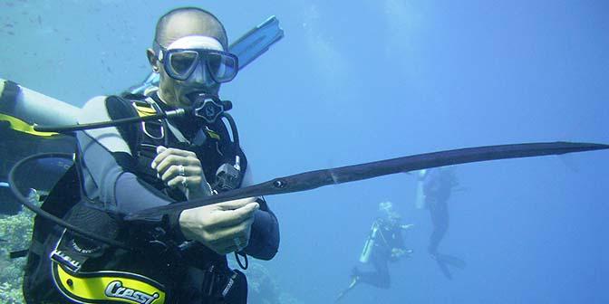 trompetvis rode zee