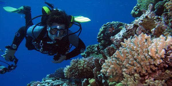 Buddy in kleurrijk koraal