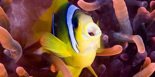 duiken hurghada vis