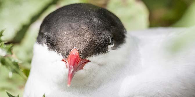 vogels farne eilanden