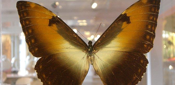 natuur historisch museum manchester
