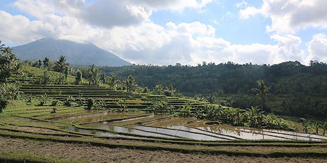 rijstvelden bali indonesie