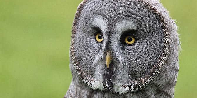 fotografie van vogels oog oehoe