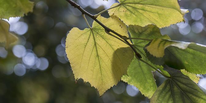 witbaland herfstftografie