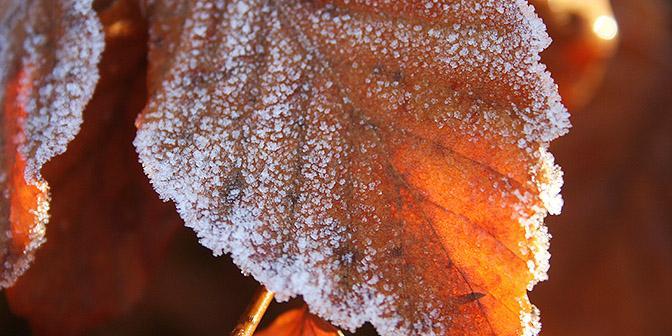 herfstfotografie rijp