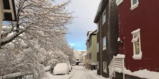 reykjacik in de sneeuw