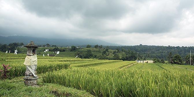 rijstvelden bali bezienswaardigheden