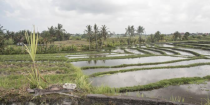 rijstvelden canggu bezienswaardigheden bali