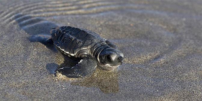 schildpad kuta