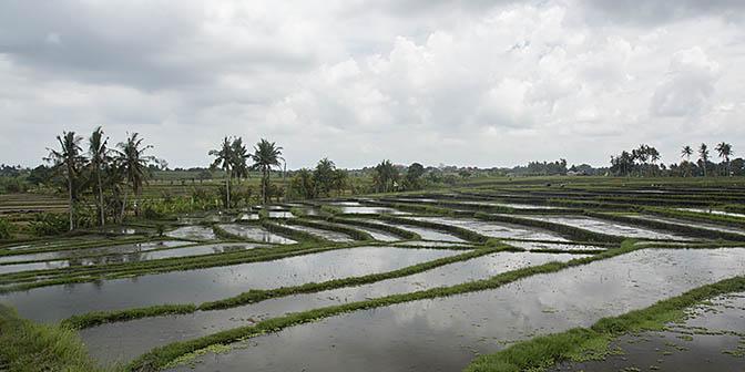 rijstvelden canggu