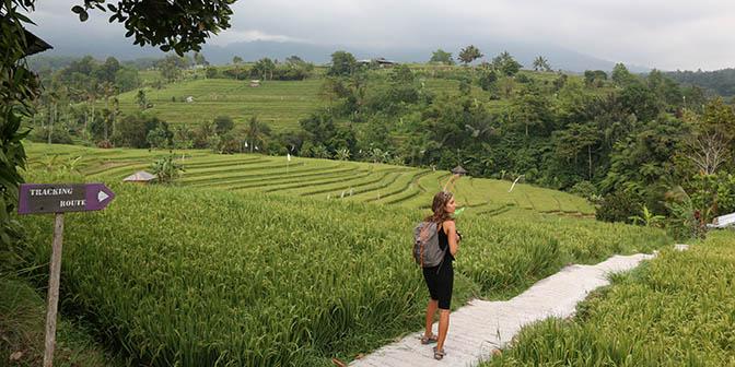 trekking jatiluwih bali indonesie