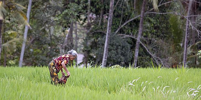 rijstvelden bali marga wandelen