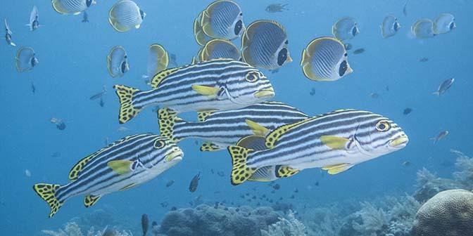 snorkelen vissen tulamben