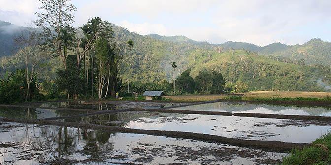 rijstvelden vulkaan moni
