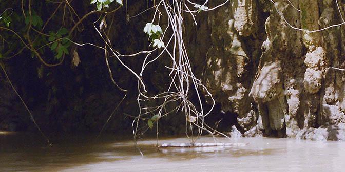 jungle green canyon