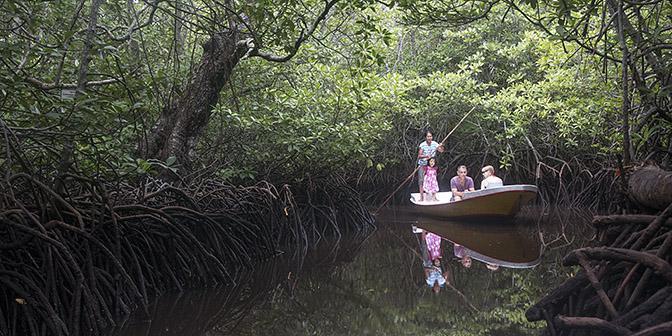 varen door mangroven