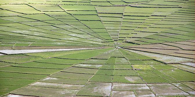 rijstvelden ruteng flores