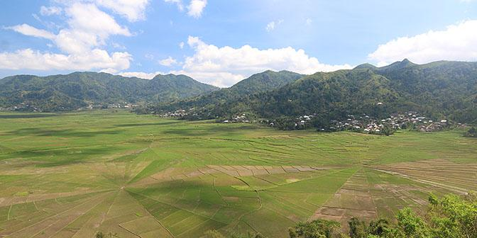 spider web rice fields ruteng