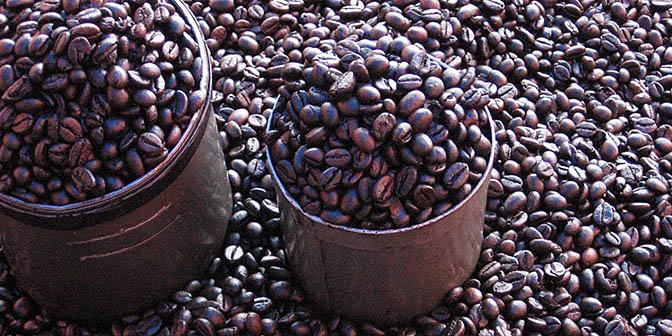 sulawesi koffie