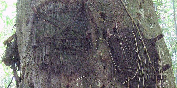 babyboom toraja indonesie