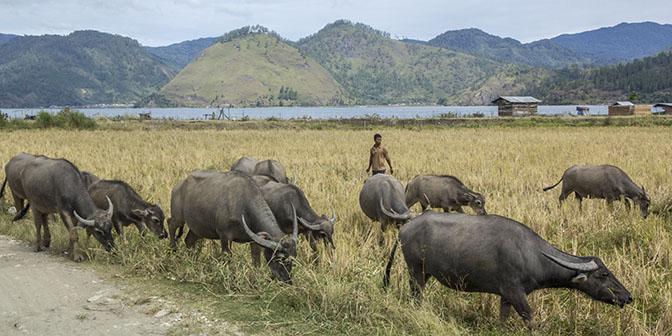 platteland sumatra