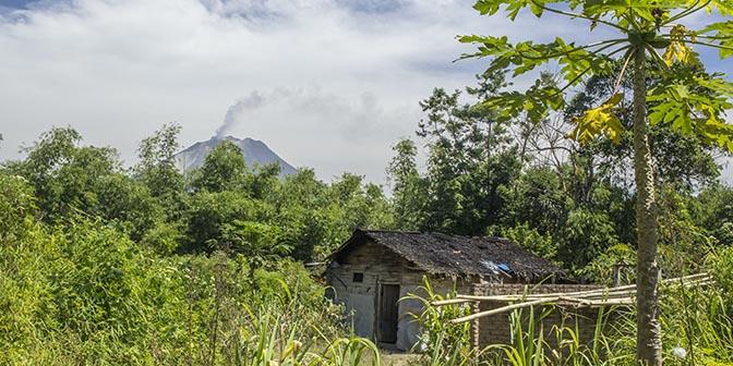 reis sumatr