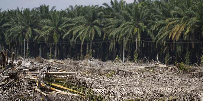 ontbossing sumatra