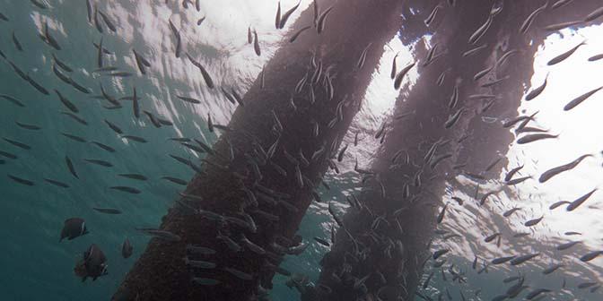 duiken kantduik pulau weh