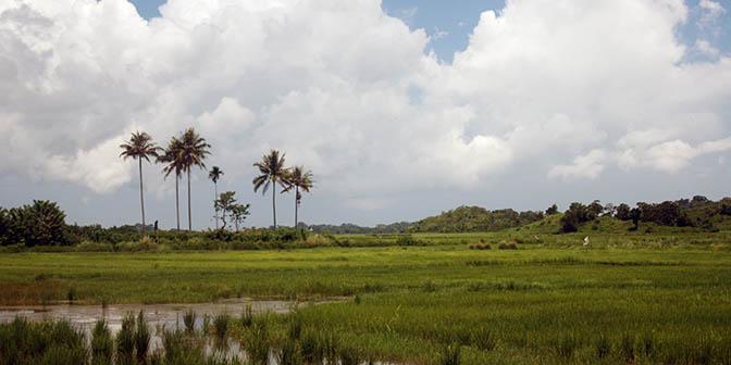 rijstvelden sumba