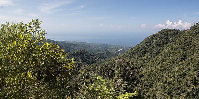 uitzicht trekking jungle