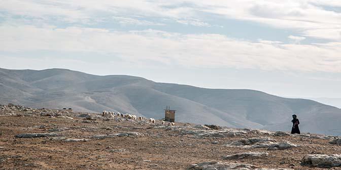 judean desert bedoeinen