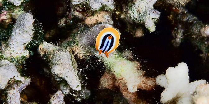 nudi duiken in aqaba