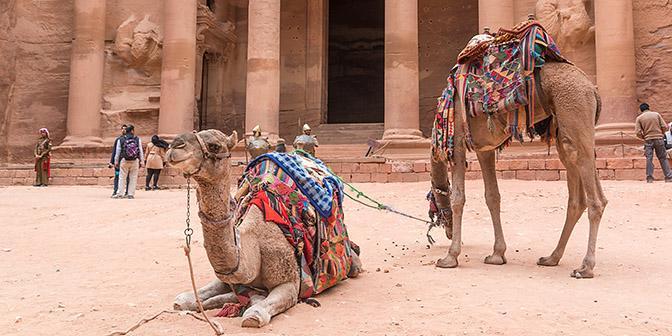 doen in jordanie kameel