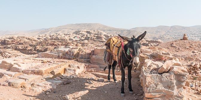 ezel trekking jordanie